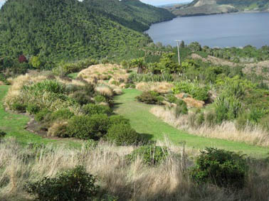 Nz Grasses For Landscaping Treeline native nursery growers of a wide range of high quality treeline native nursery growers of a wide range of high quality hardy new zealand native plants workwithnaturefo